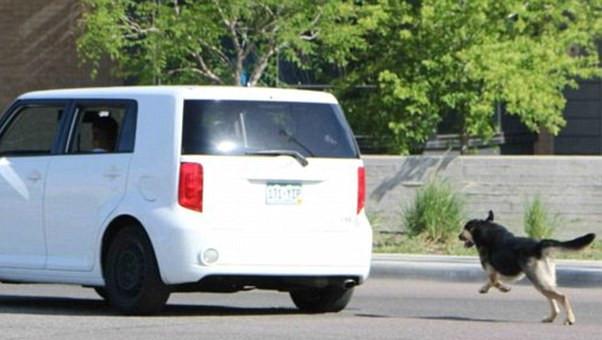 הרכב ניזוק לאחר שפגע בכלב – האם בעל הכלב יחויב בפיצויים?