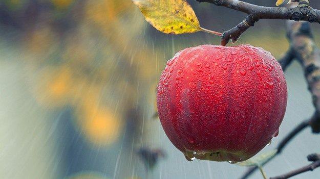 נזקי מזג האוויר הסוער לחקלאים בשבוע שחלף: יותר מ-70 מיליון שקל