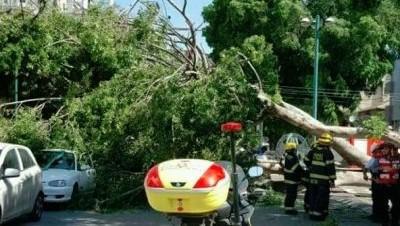 הרשות המקומית תפצה אזרח בשל נזק למכוניתו עקב נפילת ענף עץ / מאת ג'ון גבע