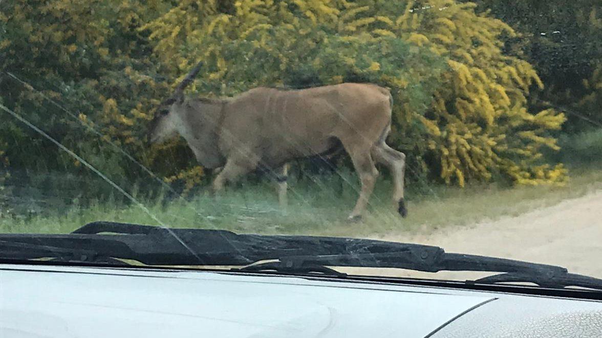 המחוזי: רכב הנפגע על ידי בעל חיים נחשב לתאונת דרכים על פי חוק הפיצויים לנפגעי תאונות דרכים